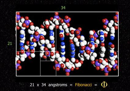 DNA molecule helix 34 x 21 Angstroms