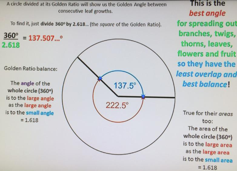 GoldenAngle-FibonacciGarden-MichaelSchneider