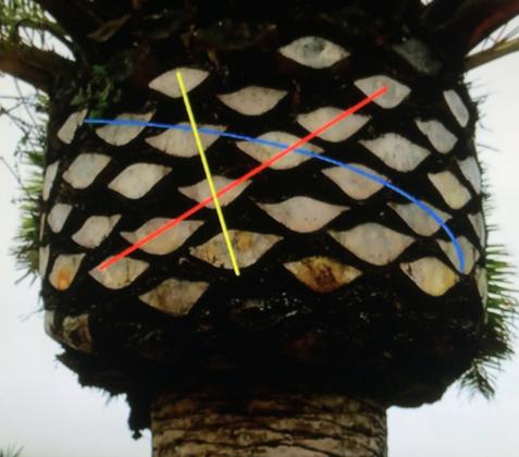 palmTreeSpirals-FibonacciGarden-MichaelSchneider