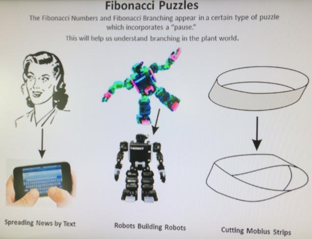 puzzles-FibonacciGarden-MichaelSchneider